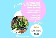 Succulent Box Planter Workshop At Pachamama By Crystalbrook