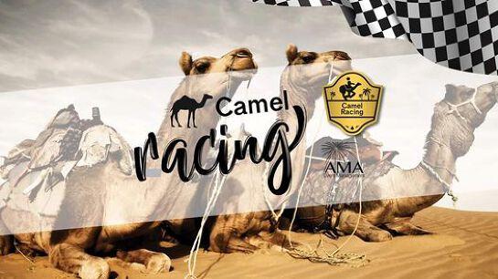 Camel Races - Maryborough Date TBC